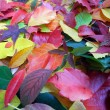 Colorful autumn leaves background upright - Stock Photo
