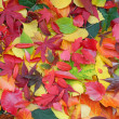 Royalty-Free Stock Photo: Colorful autumn leaves background