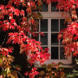Autumn window — Stock Photo #13153230