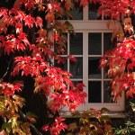 Autumn window — Stock Photo #13153230