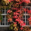 Autumn windows - Stock Photo