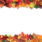 Colorful autumn leaves and copy space — Stock Photo