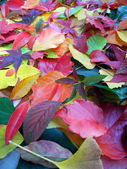 Colorful autumn leaves background upright — Stock Photo