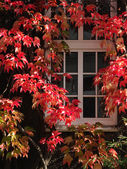Autumn window — Stock Photo