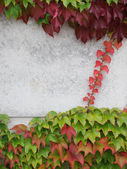 Autumn leaves and concrete — Stock Photo