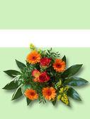 Flower greeting — Stock Photo