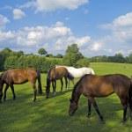 Horses — Stock Photo #30017939