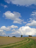 Agrarian landscape — Stock Photo