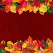 Leaves with maroon background — Stock Photo #35428935