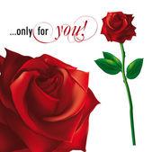 Rote rose abbildung — Stockvektor