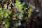 Indian summer web — Stock Photo