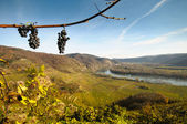 Autumn in Wachau — Foto Stock