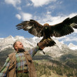 Golden eagle in front Tennengebirge - Stock Photo