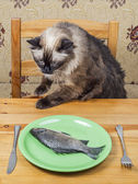 Cat at dinner table — Stock Photo