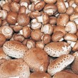 Bunch of mushrooms - Stock Photo