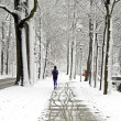 Snowy woods in the Netherlands — Stock Photo