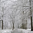 Stock Photo: Snowy forest in winter in the Netherlands