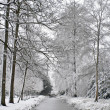 Snowy forest in winter in the Netherlands — Stock Photo #18478789