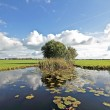 Stock Photo: Typical wide dutch landscape with meadows, water and cloudscapes