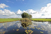 Typical wide dutch landscape with meadows, water and cloudscapes — Stock Photo