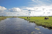 Typical wide dutch landscape with sheep, water and cloudscapes — Stock Photo