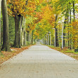 Lane in autumn in the Netherlands - Stock Photo
