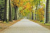 Lane w jesieni w holandii — Zdjęcie stockowe