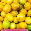 Organic citrons from Portugal — Stock Photo