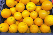 Organic oranges from Portugal — Stock Photo