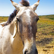 Horse in the countryside from Portugal — Stock Photo