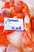 Black belly rose fish in the fishmarket — Stock Photo