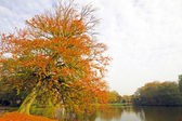 Fall in the Netherlands — Stock Photo