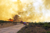 Huge forest fire threatens national park at the westcoast in Portugal — Stock Photo
