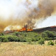 Huge bush fire at the westcoast in Portugal — Stock Photo
