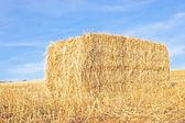 Balle de foin dans les champs du portugal — Photo