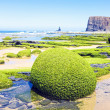 Rocks full of seaweed at westcoast in Portugal — Stock Photo #28997741