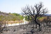 在葡萄牙的风景黑烧伤软木树 — 图库照片