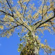 Tree in fall against a beautiful sky — Stock Photo