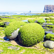 Rocks full of seaweed at the westcoast in Portugal — Stock Photo