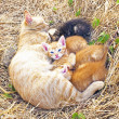Mother cat with young kittens in the wild — Stock Photo #29958145