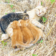 Mother cat with young kittens in the wild — Stock Photo
