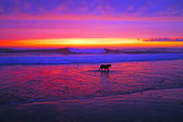 Incredible sunset at the westcoast in Portuga — Foto Stock