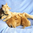 Mother cat with kittens — Stock Photo