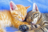 Two little kittens sleeping — Stock Photo