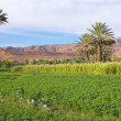 Oasis in the dade valley in Morocco Africa — Stock Photo