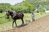 Aljezur, portugal, 4 avril 2011 : agriculteur est labourer la terre en — Photo