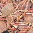 Stock Photo: Lots of crabs