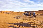Camel caravan going through the sand dunes in the Sahara Desert — Stock Photo