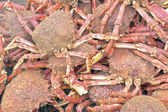 Lots of crabs — Stock Photo