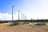 Windmills in the cunucu — Stock Photo